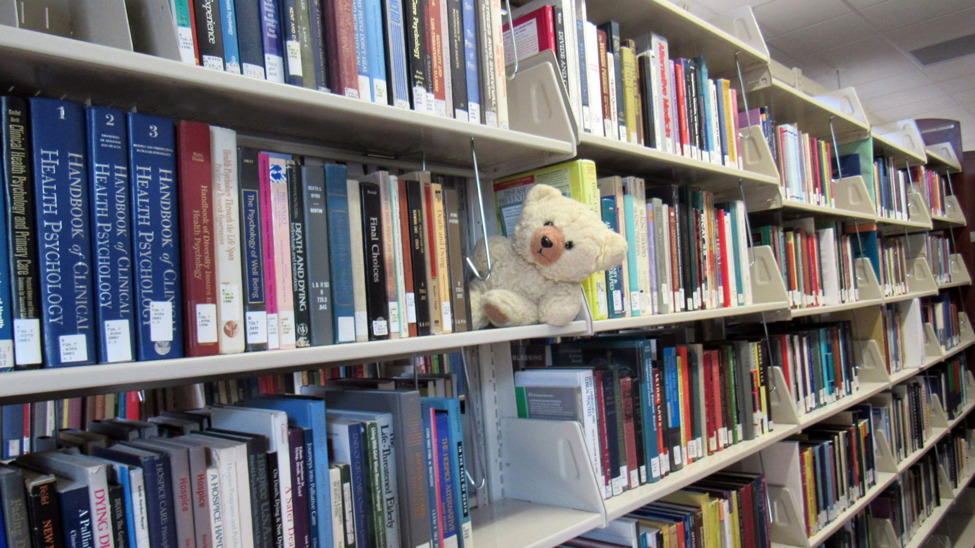 Ambyr Noelle buried in the book stacks at the University of Nevada, Reno (UNR) library